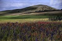 Rolling hills and wild flowers
