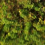 """""""Colorful Canal Reflections IMG_2425"""" by rayjacque"""