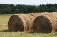 Rolled Hay Stack