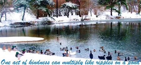 Ducks snowy pond with inspirational quote