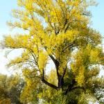 """Autumn Tree"" by DesignWindmill"
