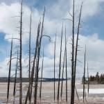 """Petrified Trees"" by getfarid"