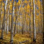 """FallColors-20080927_211.jpg"" by greggl"