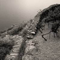 Dry Stone Wall and Vineyard