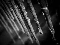 Winter Icicles 6