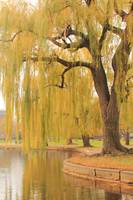 Weeping Willow, Boston Public Gardens