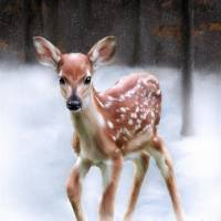 Baby Deer Snow Scene Art Prints & Posters by Garry West