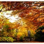 """Autumn Sunbeam"" by amira"