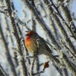 """Frosty Winter Morning - Little Bird"" by vpicks"
