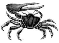 Vintage Illustration of a Fiddler Crab