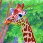 """""""Giraffe 3"""" by lisaarundale"""