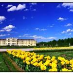 """""""Schönbrunn"""" by amira"""