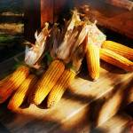 """Corn on the Cob at Outdoor Market"" by susansartgallery"