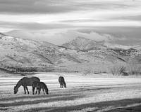 Rocky Mountain Colorado Country Morning BW