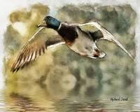 Duck in Watercolor