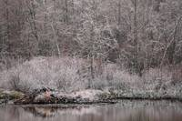 Winter Beaver Pond