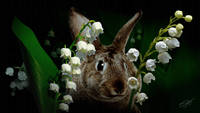 Rabbit in the Lillies