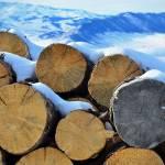 """""""Winter Firewood"""" by linnea"""