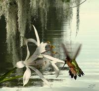 Hummingbird and Swamp Lily