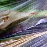 """Winds of Autumn"" by Kathie_Nichols"