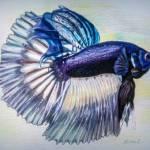 """betta fish"" by Zinastr"