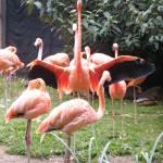 """""""I Am Flamingo"""" by Kimmary"""