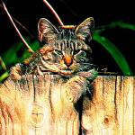 """Kitten on a Fence"" by jt85"