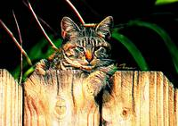 Kitten on a Fence
