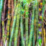 """Bamboo"" by VHarris"