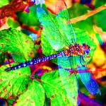 """UK Dragonfly"" by photosbysammy"
