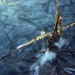 """""""Ice 10mpixels"""" by photosbysammy"""