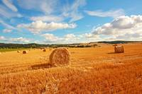 Summer fields and haybales
