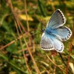 """Butterfly Blue"" by photosbysammy"