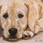 """Yellow Lab"" by Kevinmeredith"