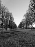 Tree Lined Path in Paris