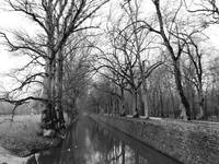 Tree Lined Canal in Loire Valley