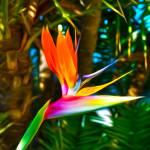 """Bird of Paradise"" by wcsmack"