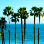 """Long Beach - California - Ocean - Palm Trees"" by wcsmack"
