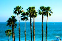Long Beach - California - Ocean - Palm Trees