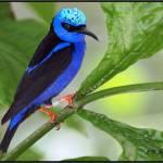 """""""BEAUTIFUL BLUES"""" by JCJones"""