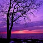 """""""Purple Water"""" by mommysam"""