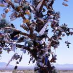 """Shoe Tree"" by mitchellpictures"