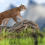 """Mountain Lion"" by walbyent"