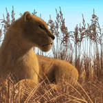 """Lioness in the Grass"" by walbyent"