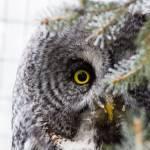 """""""Calgary Zoo - December 15th 2012"""" by Mottull"""