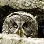 """""""Owl"""" by Mottull"""
