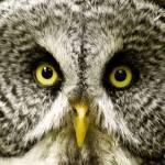 """""""Owl Eyes"""" by Mottull"""