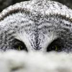 """""""I See You"""" by Mottull"""