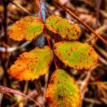 """Fall Leaf"" by Mottull"
