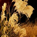 """Golden Harvest"" by PhotographsByCarolFAustin"